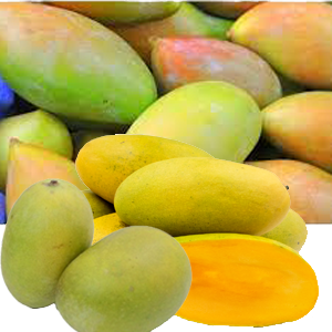 CATEGORY: NORTH INDIAN MANGOES